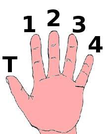 position de la main gauche à la guitare